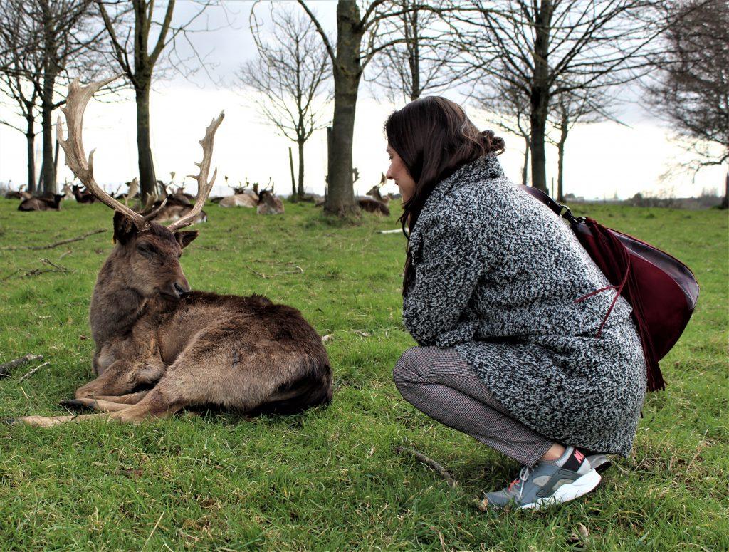 dublin deers